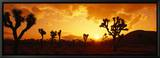 Sunset, Joshua Tree Park, California, USA Leinwandtransfer mit Rahmung von  Panoramic Images