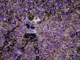 Super Bowl XLVII: Ravens vs 49ers - Ma'ake Kemoeatu Fotografisk trykk av Charlie Riedel