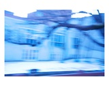 Blue Tree Freeze Premium Giclee Print by Robin Sutliff