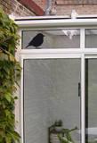Le Moineau (Window Decal) - Pencere Çıkartmaları