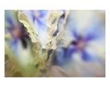 Flutter Premium Giclee Print by Robin Sutliff