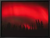 Red Aurora Borealis, Alaska Framed Canvas Print by Michael S. Quinton