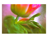 Anemone Scarf Premium Giclee Print by Robin Sutliff