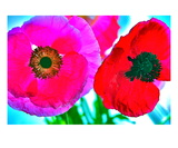 Poppies Pow Premium Giclee Print by Robin Sutliff