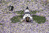 Super Bowl XLVII: Ravens vs 49ers - Chykie Brown Photo av Charlie Riedel