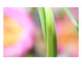 Grass Roll Premium Giclee Print by Robin Sutliff