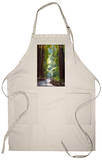 Muir Woods National Monument, California - Pathway Apron Apron
