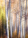 Come Walk with Me Photographic Print by Ursula Abresch