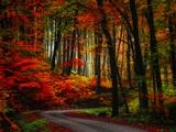 Philippe Sainte-Laudy - Colorful Way Fotografická reprodukce