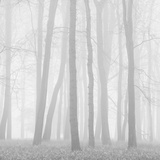 Morning Mists II Fotodruck von Doug Chinnery
