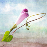 Pastel Photographic Print by Philippe Sainte-Laudy