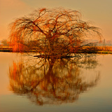 Golden Tree Photographic Print by Philippe Sainte-Laudy
