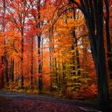 Arcoíris de otoño Lámina fotográfica por Philippe Sainte-Laudy