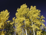 Leaves of Gold Photographic Print by Art Wolfe