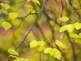Yellow Leaves Photographic Print by Art Wolfe