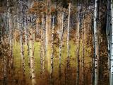 Crunchy Photographic Print by Ursula Abresch