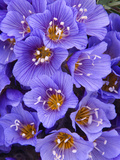 Purple Flowers Photographic Print by Art Wolfe