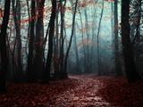 The Path Not Take Fotografie-Druck von Philippe Manguin