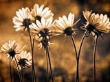 Warm and Sunny Fotografisk tryk af Ursula Abresch