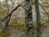 Fall Fog IIi Fotografie-Druck von Art Wolfe