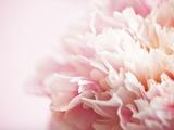 Fade to Pink Fotodruck von Doug Chinnery