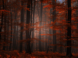 Spiritueller Wald Fotodruck von Philippe Sainte-Laudy