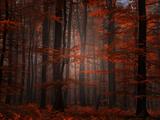 Spiritueel bos Fotoprint van Philippe Sainte-Laudy