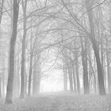 Doug Chinnery - Morning Mists Iv Fotografická reprodukce
