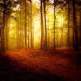 Der Duft des Herbstes Fotodruck von Philippe Sainte-Laudy