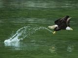 Water Skipping 写真プリント : アート・ウルフ