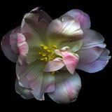 Pink Tulip Photographic Print by Magda Indigo