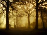 Yellow Morning Lámina fotográfica por Philippe Manguin