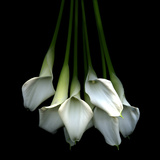 White Callas Photographic Print by Magda Indigo