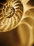 Shells 5 Photographie par Doug Chinnery