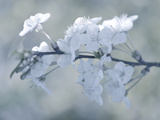White Bouquet Photographic Print by Philippe Sainte-Laudy