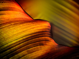 Leaf Photographic Print by Ursula Abresch