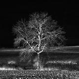 Demasiado Zen Lámina fotográfica por Philippe Sainte-Laudy