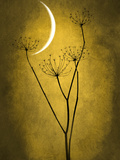Under the Moon 3 Photographic Print by Philippe Sainte-Laudy
