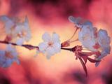 Tempo di primavera 2 Stampa fotografica di Philippe Sainte-Laudy