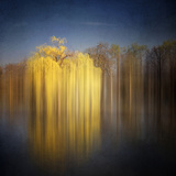 Weeping Willow Photographic Print by Philippe Sainte-Laudy