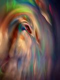 Firebird Fotografisk trykk av Ursula Abresch