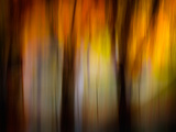 Fall Light Photographic Print by Ursula Abresch