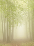 Forest Softness Photographic Print by Doug Chinnery
