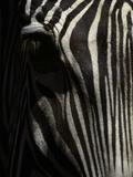 Ever Sleek 2 Fotografie-Druck von Art Wolfe