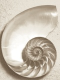 Sea Shell Photographic Print by Doug Chinnery