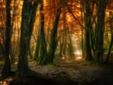 Red Forest Reproduction photographique par Philippe Manguin