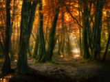 Red Forest Photographic Print by Philippe Manguin