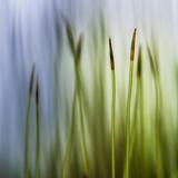Moos Fotografie-Druck von Ursula Abresch
