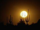 Desert Sun Photographic Print by Art Wolfe