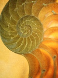 Doug Chinnery - Shells 7 Fotografická reprodukce